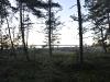 110910 Kväll i skogen