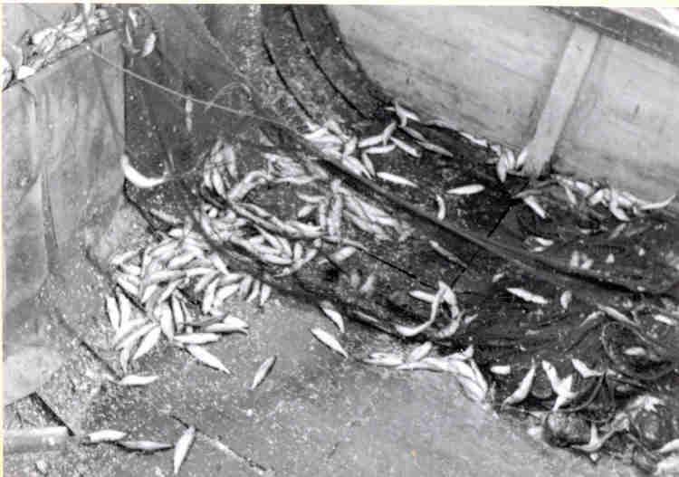 1950Helga10