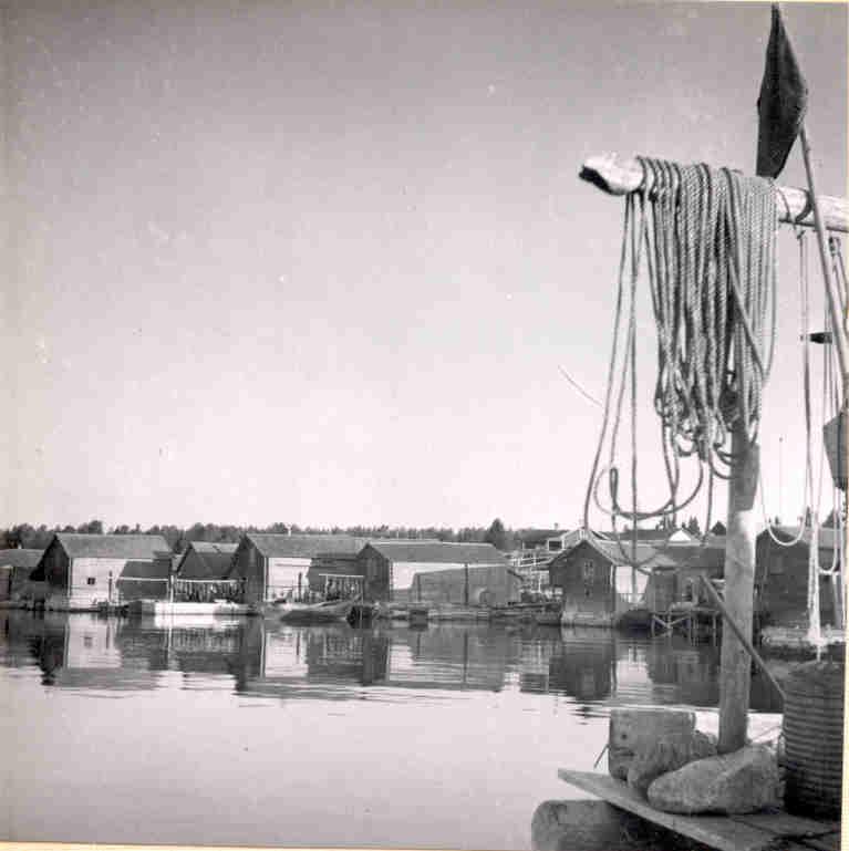 1950Helga13